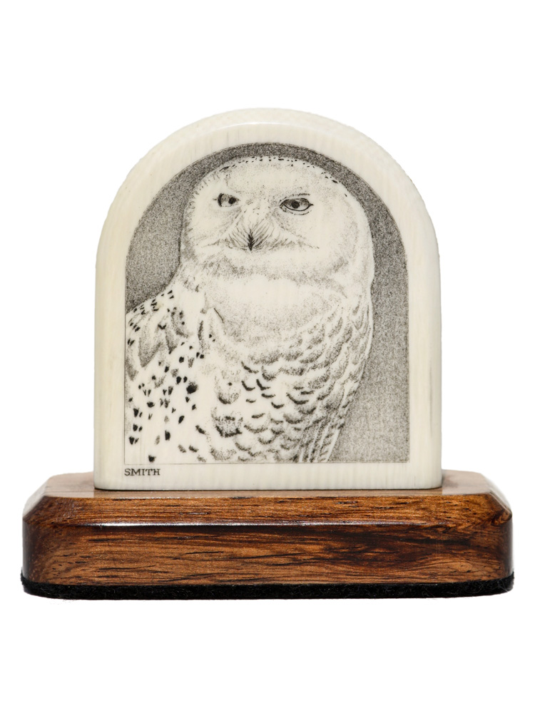 David Smith Scrimshaw - Snowy Owl