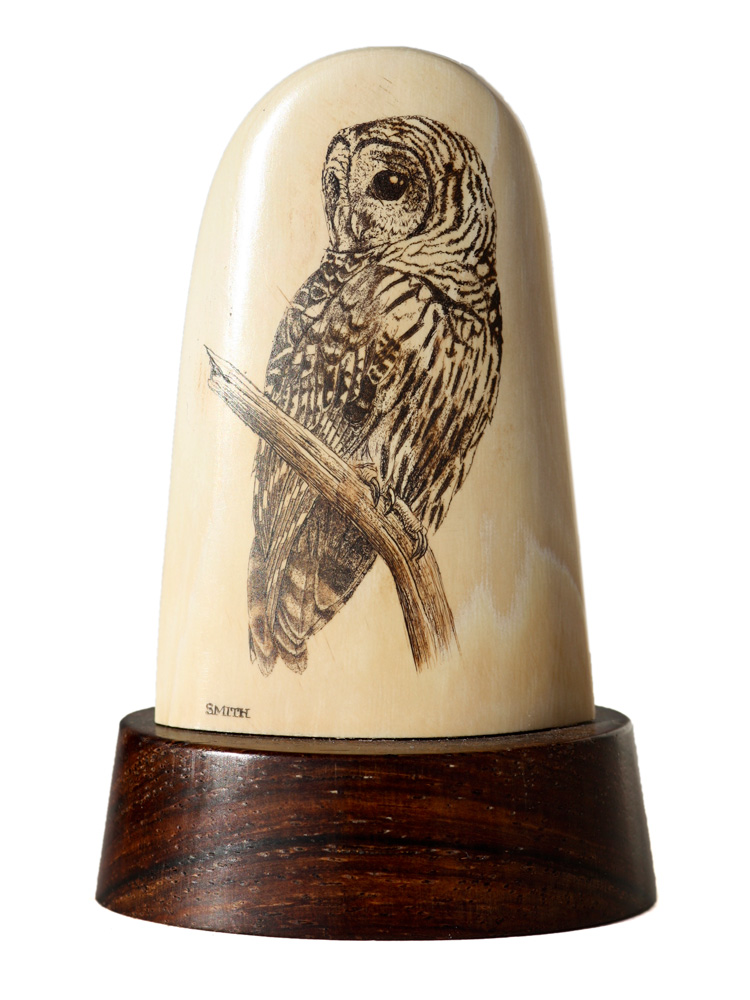 David Smith Scrimshaw - Owl Looking for a Meal