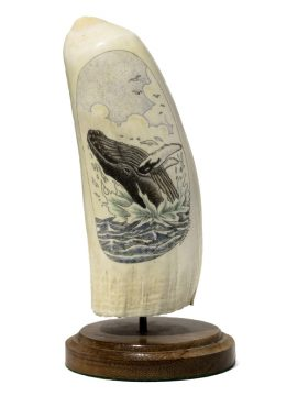 S.J. Wainwright Scrimshaw - Humpback Making a Splash