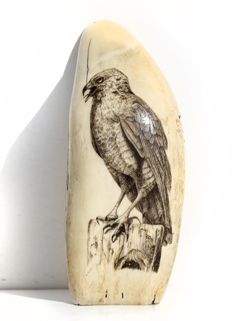 Screaming Falcon - Unknown Artist
