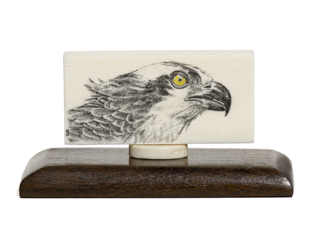 David Smith Scrimshaw - Osprey on Antique Ivory Domino