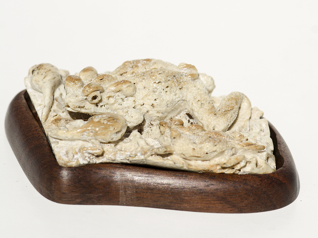 Ancient Walrus Jawbone Carving - Frog Tadpole Family