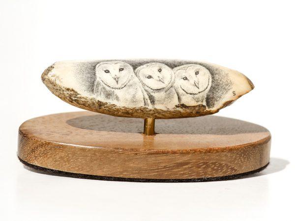David Smith - Barn Owl Trio Scrimshaw
