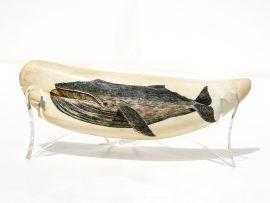 Robert Spring Scrimshaw - Bowhead Whale - Scrimshaw Collector