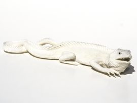 Outstanding Carved Iguana